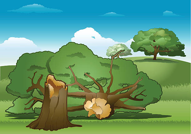 Fallen Tree Illustrations, Royalty-Free Vector Graphics ...