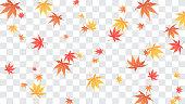 Falling autumn maple leaves Vector illustration. Maple leaves on fake transparent background