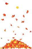 Flying autumn leaves.