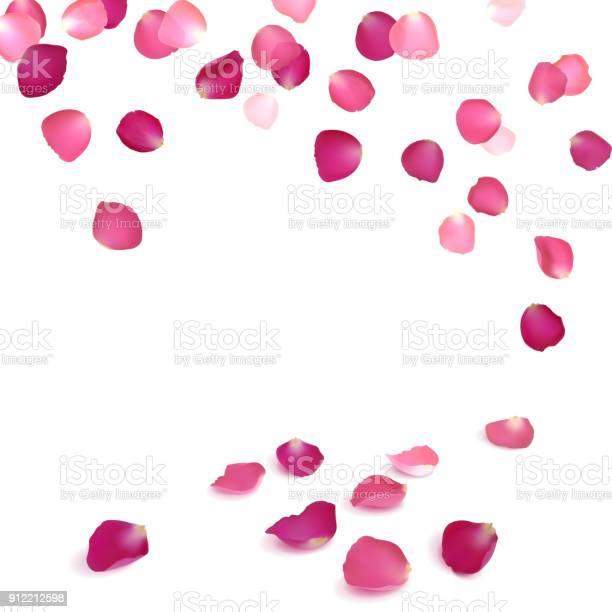 Falling petals of pink roses vector id912212598?b=1&k=6&m=912212598&s=612x612&h=9vcmcgyqesfvabztqaarh p7cz2zxiqzivgtcqoh9lk=