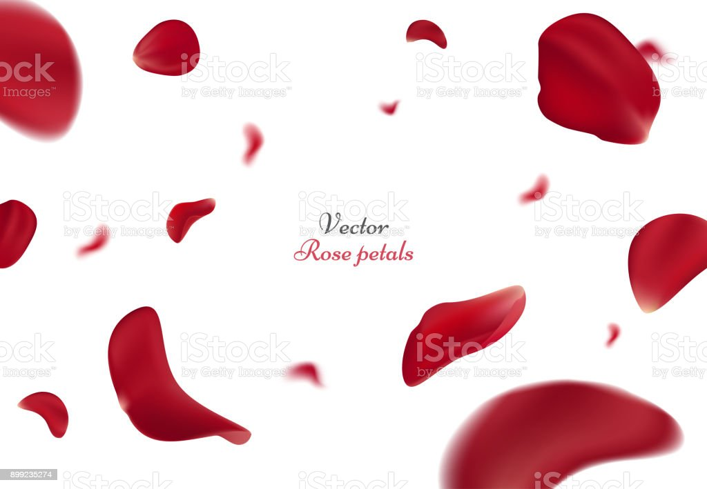 Falling red rose petals isolated on white background. Vector illustration with beauty roses petal, applicable for design of greeting cards on March 8 and St. Valentine's Day. Eps 10 royalty-free falling red rose petals isolated on white background vector illustration with beauty roses petal applicable for design of greeting cards on march 8 and st valentines day eps 10 stock vector art & more images of abstract