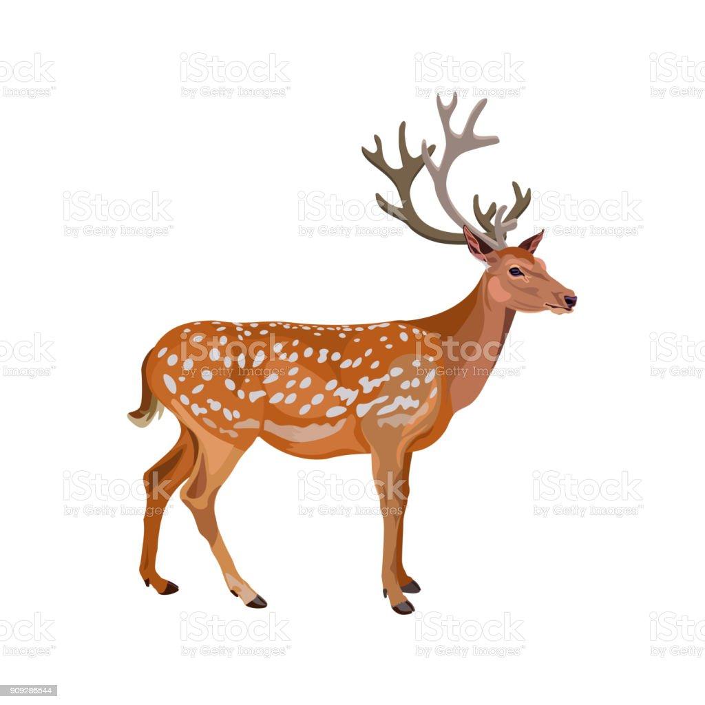 Fallow Deer Buck Stock Vector Art & More Images of Animal 909286544 ...