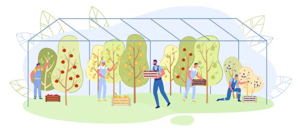 ilustrações de stock, clip art, desenhos animados e ícones de family business fruit growing in greenhouse, slide - picking fruit