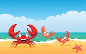 Family of crabs on a beach