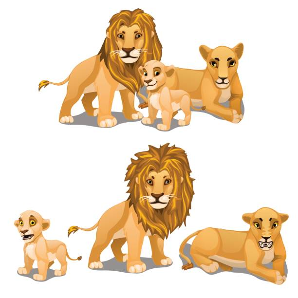Family of lions, mother, father and baby. Vector Family of lions, mother, father and baby. Vector animals on a white background. Illustration isolated lion cub stock illustrations