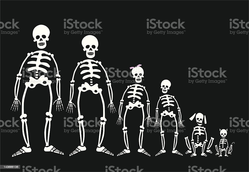 Family of Skeletons vector art illustration