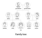 Family tree chart, genealogical tree, family portraits,pedigree thin line style vector