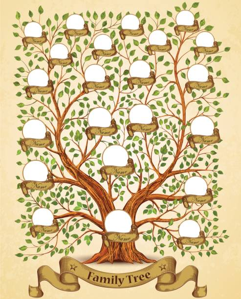 Best Family Tree Illustrations, Royalty-Free Vector Graphics