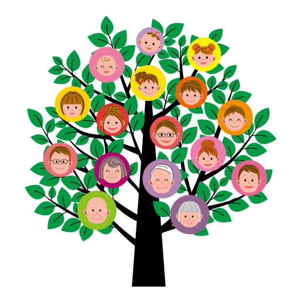 illustrations, cliparts, dessins animés et icônes de arbre généalogique - arbres généalogiques
