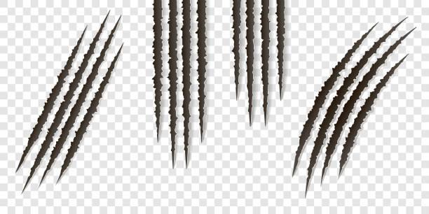 ausgefallene krallen kratzer - vektor isoliert. krallen schneidet tiere katze, hund, tiger, löwe - zerrissen stock-grafiken, -clipart, -cartoons und -symbole