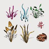 Fancy different plants and corals, big vector set
