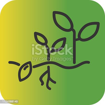Vector illustration of a plant growth Farm and agriculture Flat Simple outline line art design Icon