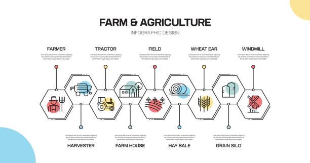 ilustrações, clipart, desenhos animados e ícones de projeto infographic da linha relacionada da exploração agrícola e da agricultura - corn farm