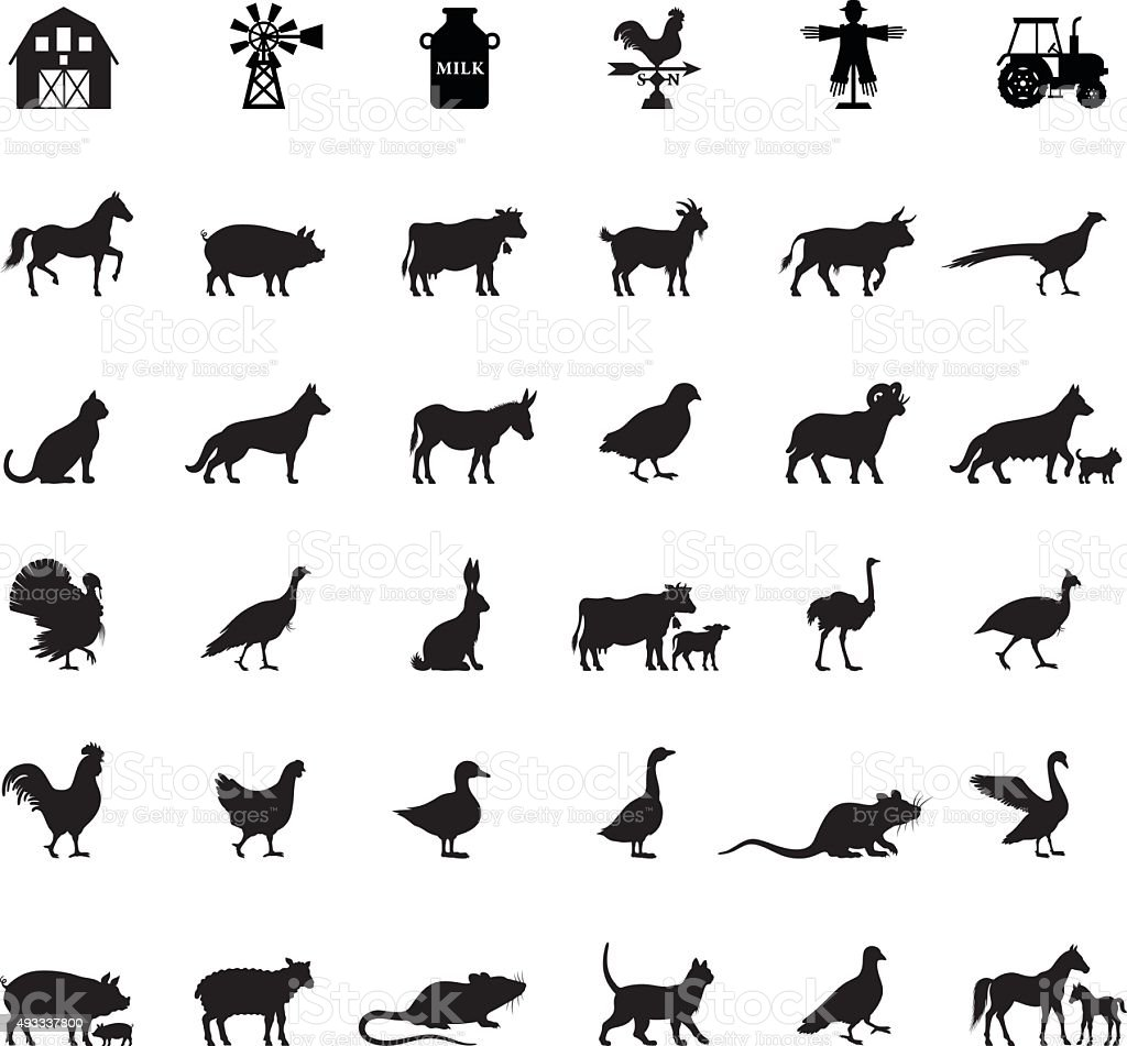 Farm and Domestic Animals