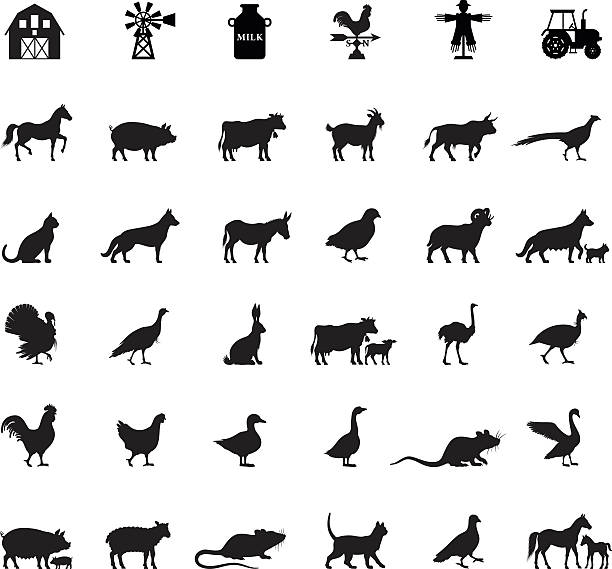 Farm and Domestic Animals vector art illustration