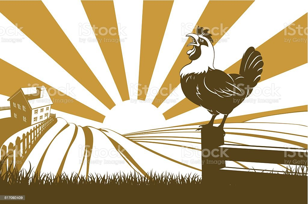 Farm and rooster vector art illustration