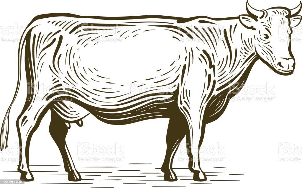 Farm Animal Cow Standing Sketch Dairy Farm Vintage Vector