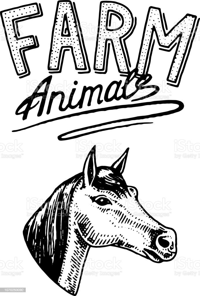 Farm Animal Head Of A Domestic Horse Logo Or Emblem For Signboard Icon For The Menu Engraved Hand Drawn In Old Sketch Vintage Style Stock Illustration Download Image Now Istock