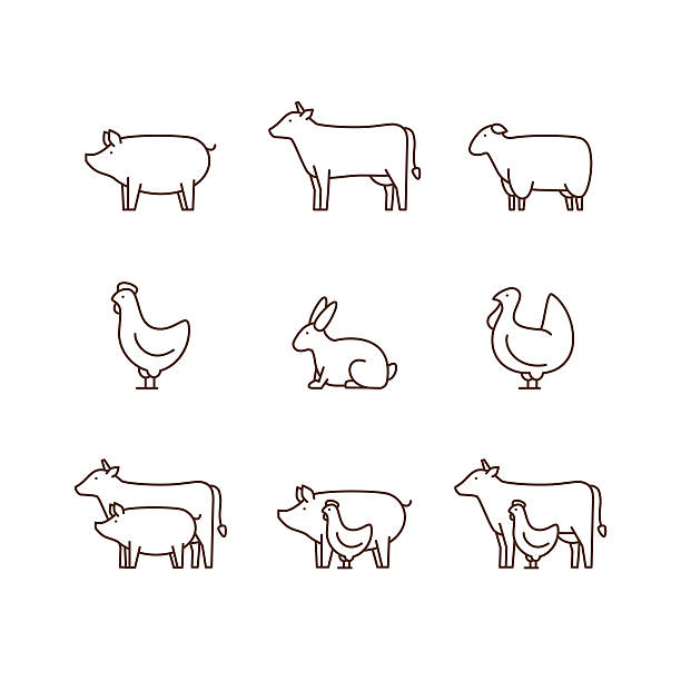 Farm animal outline icon set. Farm animal outline icon set. Pig, cow, lamb, chicken, turkey, rabbit. Icon for butcher shop. Vector illustration. farm animals stock illustrations