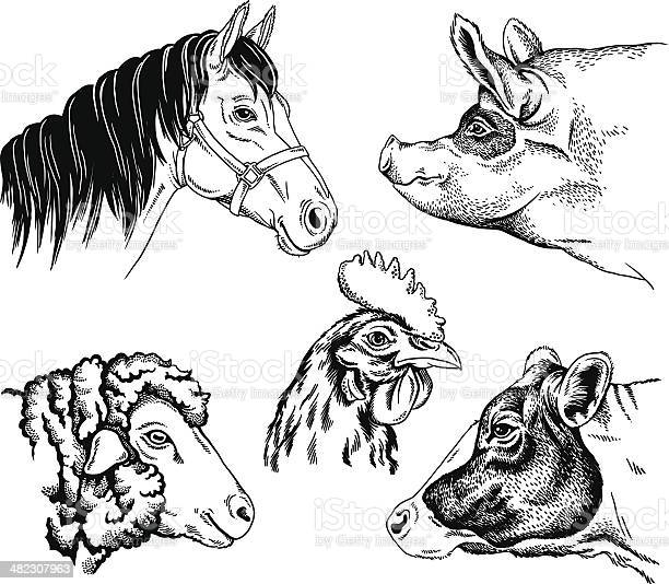 Farm animal portraits vector id482307963?b=1&k=6&m=482307963&s=612x612&h=vzumwb j6geuzb5mpotuctreovcwsdsdmejjc1hgyby=