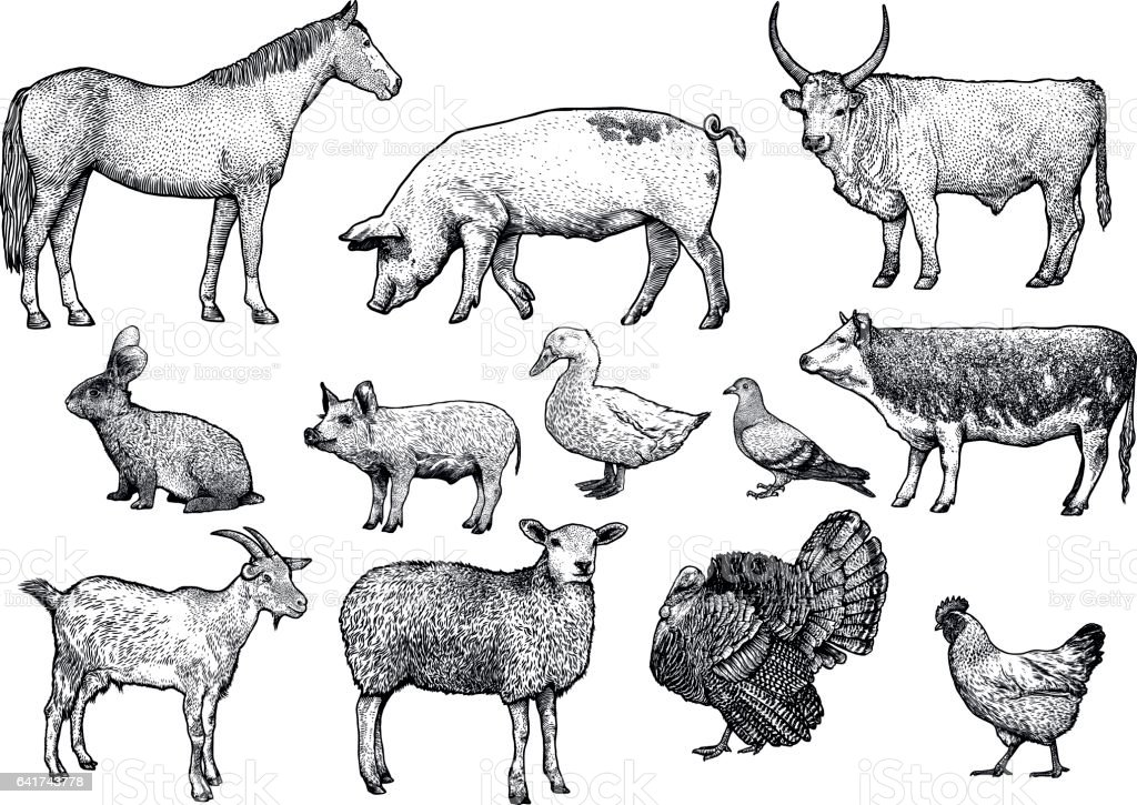 Line Art Farm Animals : Farm animal set illustration drawing engraving line art