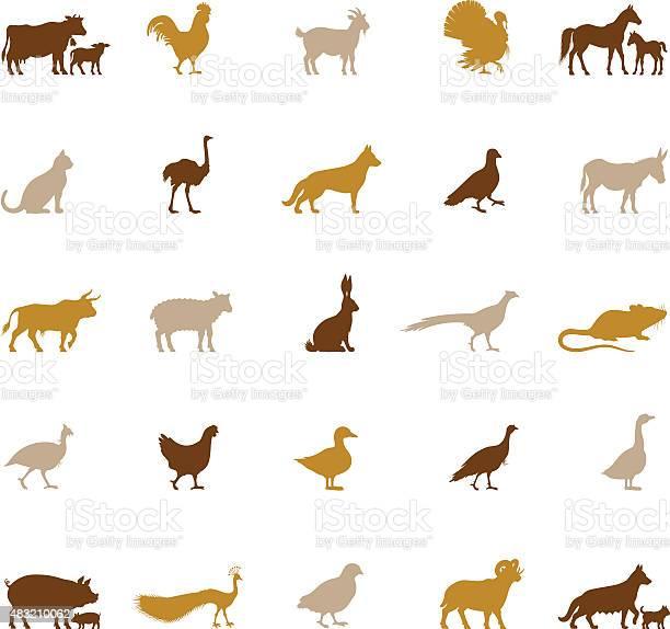 Farm animal silhouettes vector id483210062?b=1&k=6&m=483210062&s=612x612&h=vlxcyeaxpvu2wuwnbw2mxbek5dpjm7zxir2wnmorc9c=
