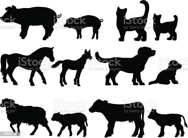 Farm animal with young infant silhouettes vector id165641653?b=1&k=6&m=165641653&s=612x612&h=zfmz9zkh1ozq  hed6zq p1m0lpu5lxztrmhtgxzgqe=