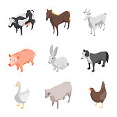 Farm Animals 3d Icons Set Isometric View Include of Cow, Pig, Sheep, Horse, Hen and Goat. Vector illustration