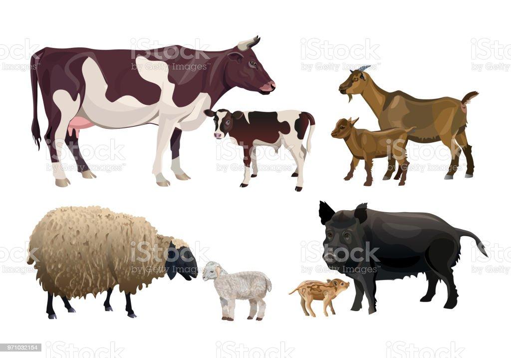Animaux de ferme et leurs enfants - Illustration vectorielle