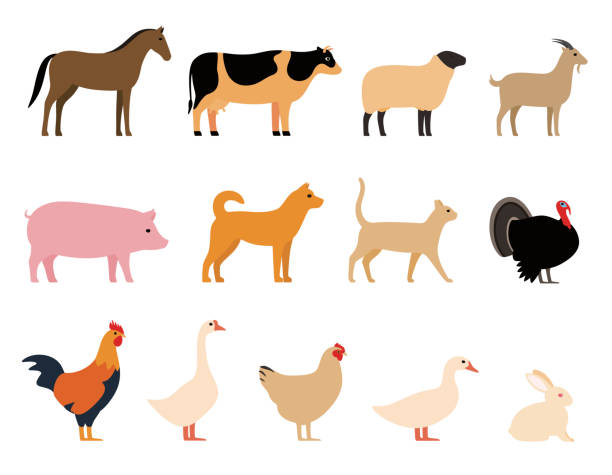 Best Farm Animals Illustrations, Royalty-Free Vector ...