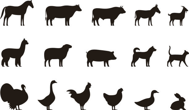 farm animals black icons set, livestock, vector illustration - animals stock illustrations