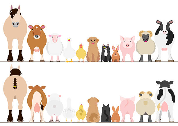 farm animals border set, front view and rear view - ilustración de arte vectorial