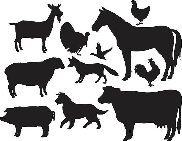 ilustraciones, imágenes clip art, dibujos animados e iconos de stock de animales de granja y caballo, vacuno y cerdo, cabra, fox, pollo, gallo - animales de granja