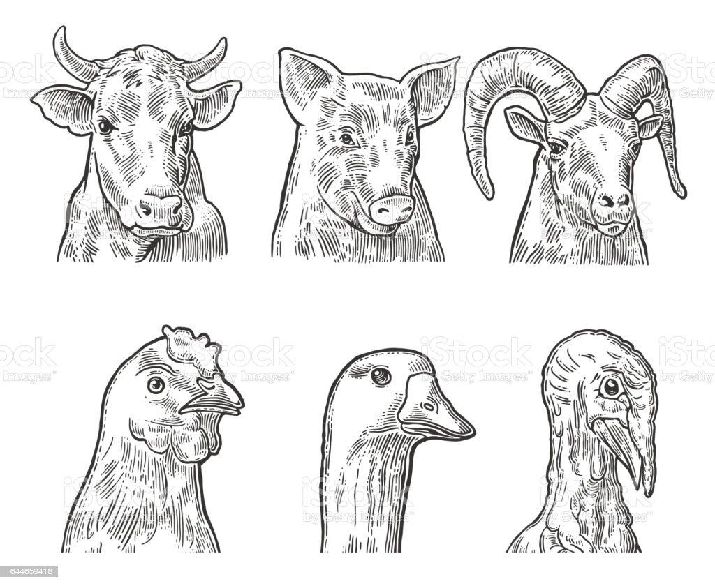 Ilustración de Conjunto De Iconos De Animales De Granja Cerdo Cabeza ...