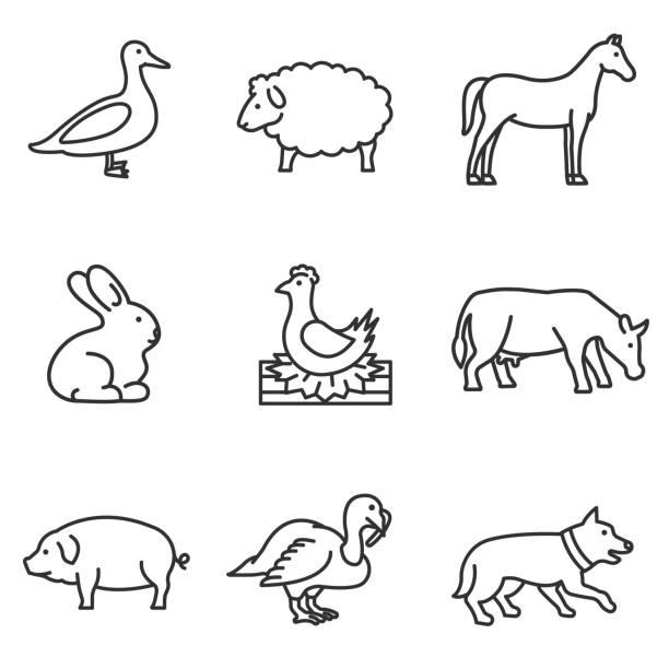 bauernhof tiere symbole festgelegt. - entenhaus stock-grafiken, -clipart, -cartoons und -symbole