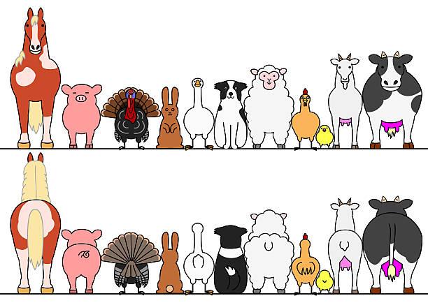farm tiere in folge der vorder- und rückseite - collie stock-grafiken, -clipart, -cartoons und -symbole