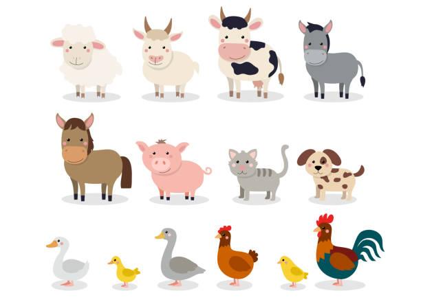 bauernhoftiere inmitten einer flachen stil isoliert auf weißem hintergrund. vektor-illustration. niedlichen cartoon tiersammlung: schaf, ziege, kuh, esel, pferd, schwein, katze, hund, ente, gans, huhn, huhn, hahn - entenhaus stock-grafiken, -clipart, -cartoons und -symbole