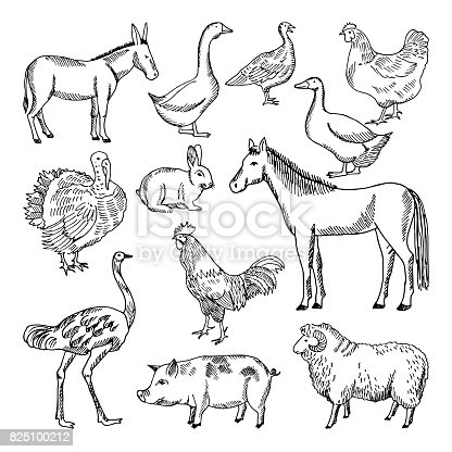 Farm animals set in hand drawn style. Vector illustrations. Animal farm sketch goose and lamb, hog and horse