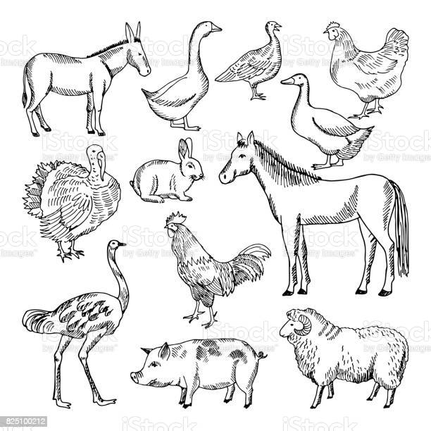 Farm animals set in hand drawn style vector illustrations vector id825100212?b=1&k=6&m=825100212&s=612x612&h= ef9z32g01x0arwlegwfqjg0gq4fqk5m8n3lukwhisc=