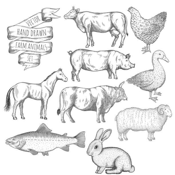 Farm animals set. Farm animals set. Hand drawn vector illustration. poultry stock illustrations