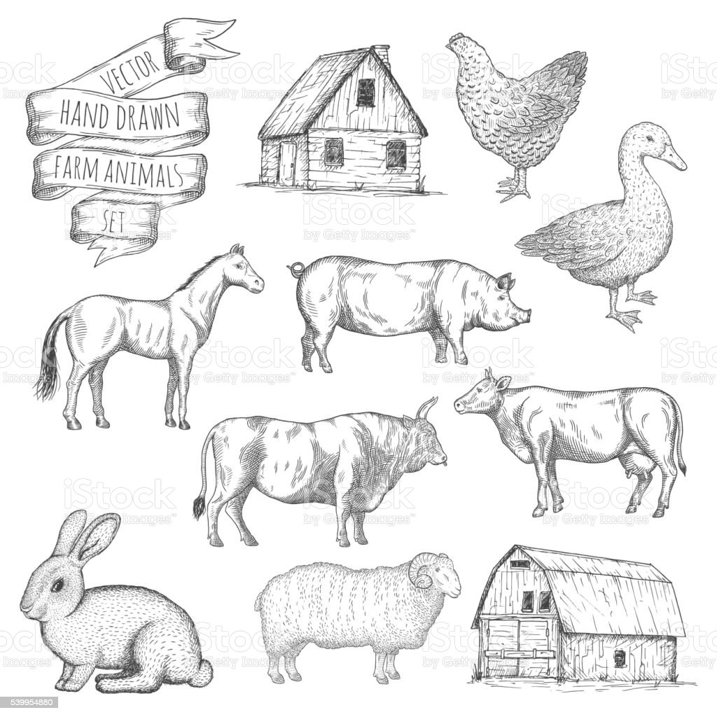 Farm animals set. vector art illustration