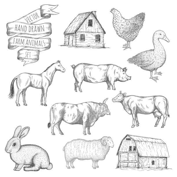 bauernhof tiere satz. - entenhaus stock-grafiken, -clipart, -cartoons und -symbole