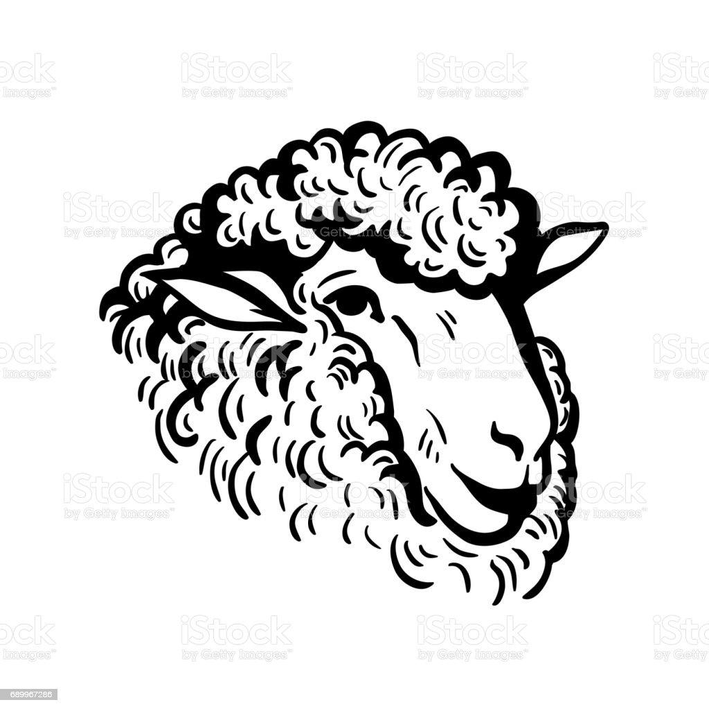 animaux de la ferme. croquis de tête moutons - Illustration vectorielle