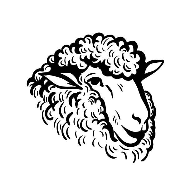 stockillustraties, clipart, cartoons en iconen met boerderijdieren. schapen hoofd schets - schaap