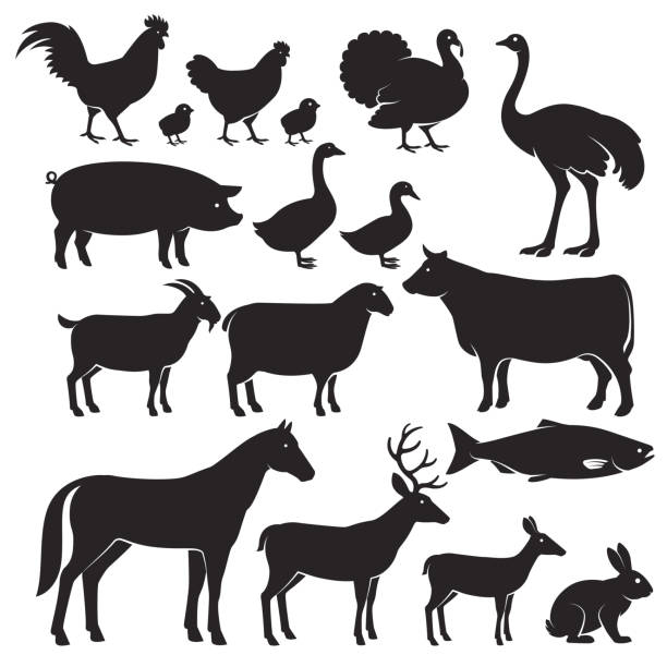 stockillustraties, clipart, cartoons en iconen met farm animals silhouette icons. - struisvogel
