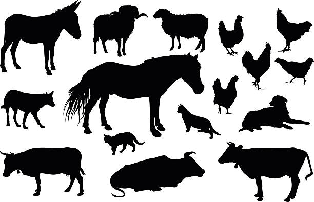 Farm animals silhouette Various farm domestic animals silhouettes on white background animal stage stock illustrations