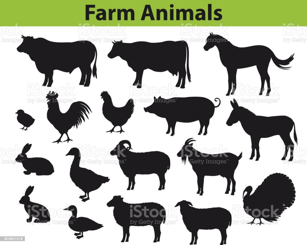 Farm animals silhouettes collection with cow, bull, horse, hen, chicken, rooster, pig, goat, sheeps, ducks, turkey, rabbits, donkey and goose vector art illustration