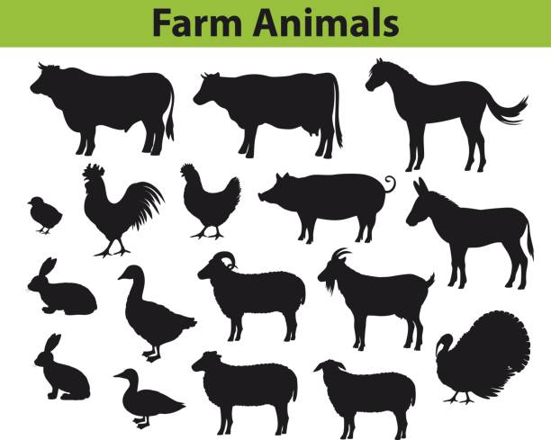 farm animals silhouettes collection with cow, bull, horse, hen, chicken, rooster, pig, goat, sheeps, ducks, turkey, rabbits, donkey and goose - cow stock illustrations, clip art, cartoons, & icons