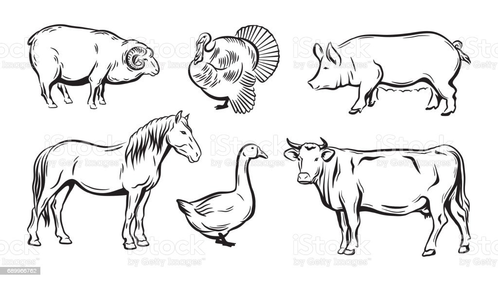 Line Art Farm Animals : Croquis danimaux de ferme cliparts vectoriels et plus d