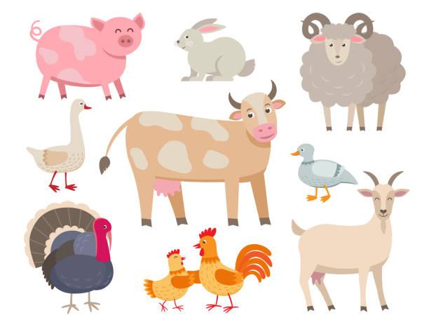 nutztiere vektor flache sammlung isoliert auf weißem hintergrund. set von tieren beinhaltet kuh, schwein, ziege, schaf, türkei, kaninchen, ente, huhn, hahn und gans in cartoon-design. - lustige kuh bilder stock-grafiken, -clipart, -cartoons und -symbole